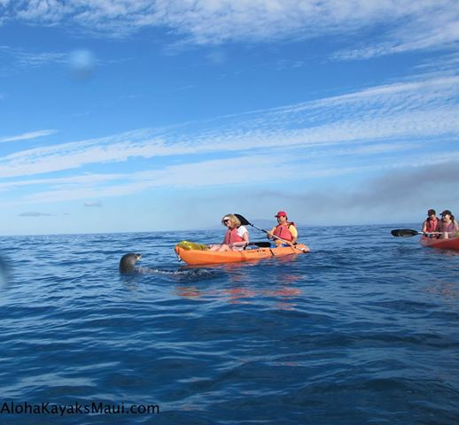See the Monk Seals!