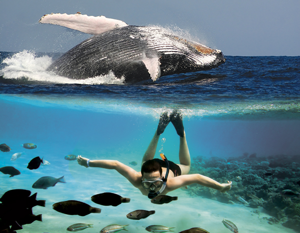 Humpback Snorkeling Tip With Friendly Charters