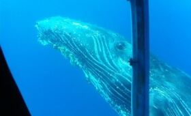Swim with the Whales