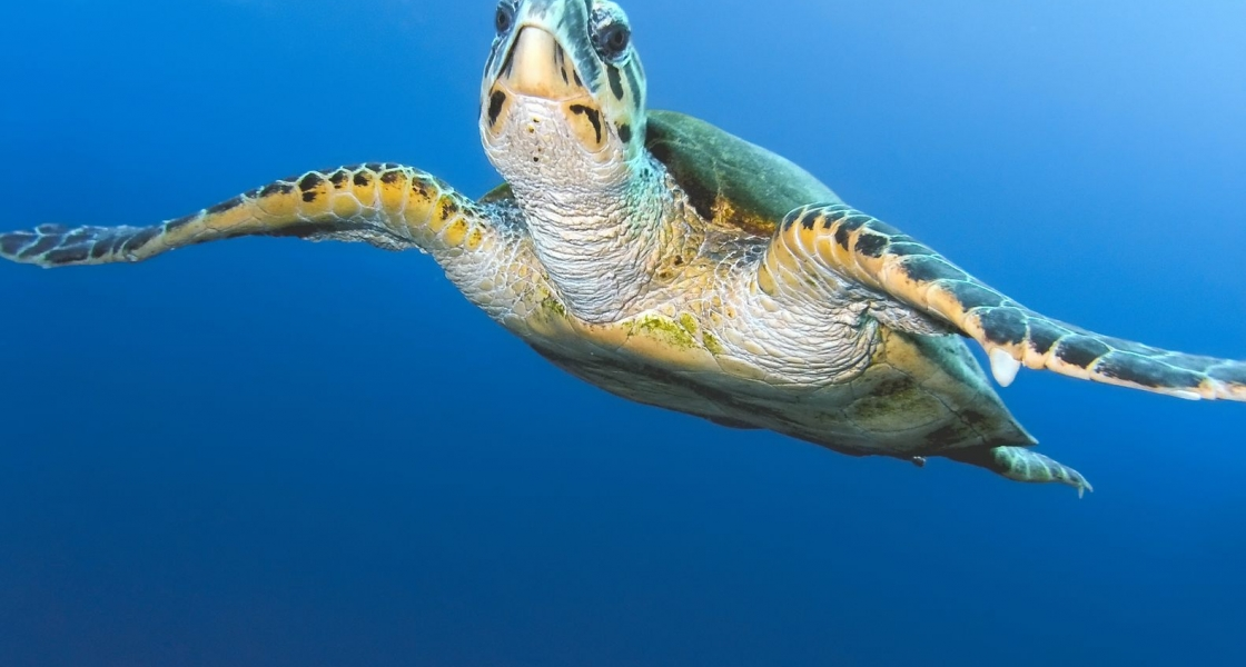 Dine at a Turtle….